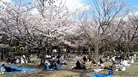 代代木公園櫻花2010 - YouTube