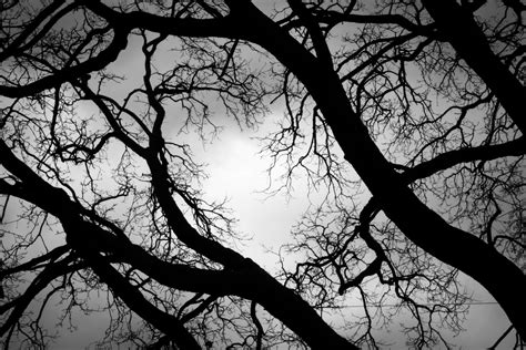 Scary Wallpaper Black And White by 3088874 Forest Mysterious Mystery Scary