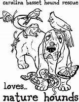 Coloring Basset Hound Sheets Pages Sheet Adult Bassett sketch template