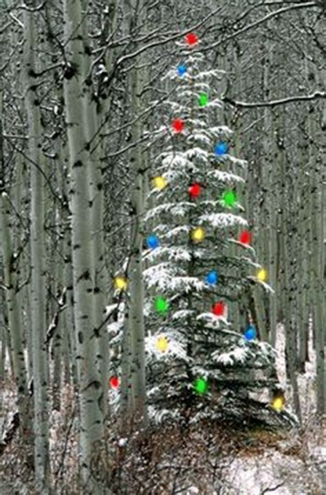 1000 images about christmas imagery pinterest merry christmas christmas trees and white
