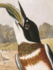 John James Audubon Birds of America