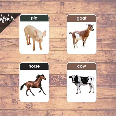 FARM ANIMALS (Real Pictures) - 27 Flash Cards   English ...