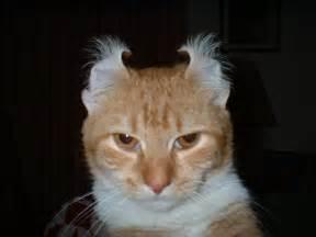 evil cats evil cat by pinkmooseofdoom on deviantart
