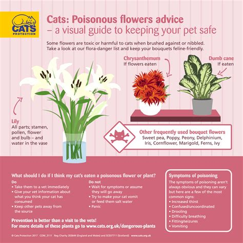 cats plants dangerous cat toxic plant flowers protection bouquets which guide lily poisoning harmful advice help infographic