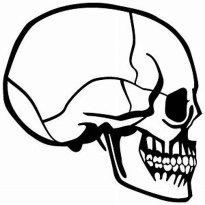 Skull Profile Side Vector Drawing Clipart Evil