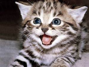 happy kitten - Kittens Photo (5890512) - Fanpop