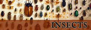 Insects & Collecting Supplies for Sale - The Bone Room