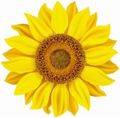Sunflower Clip Clipart Flowers Transparent Yopriceville