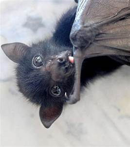 cute bat on Tumblr