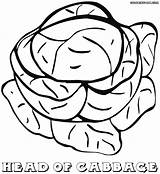 Cabbage Coloring Pages Colorings Coloringway sketch template