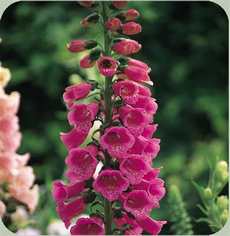 plant types annual perennial annual perennial biennial muslimgrower com