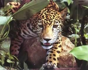 Animales de Argentina en peligro de extincion Taringa!