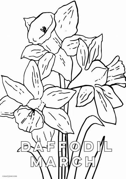Daffodil March Coloring Flower Birth Background Printing