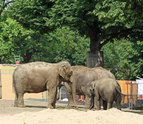 Zoologischer Garten Berlin Eintrittspreis by Zoologischer Garten Berlin Zoo Berlin Wahrzeichen Berlin