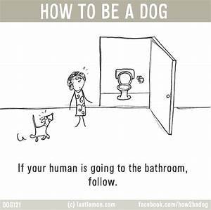 how to dogs to go to the bathroom outside 28 images With how to train dogs to go to the bathroom outside
