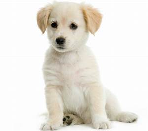 How to teach a dog to sit learn how to train your dog to for Puppy dog sitter