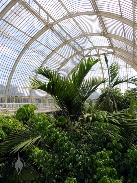 Aboutorchids » Blog Archive » Exploring The Palm House At