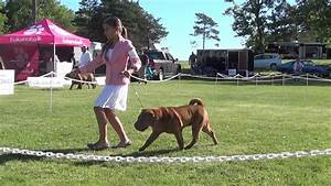 Canadian Shar-Pei National Specialty weekend All breed ...