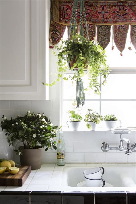 House Plants For Kitchen Window 33 creative ways to include indoor plants in your home