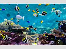 Fishes And Coral, Underwater Life Wallpapers13com