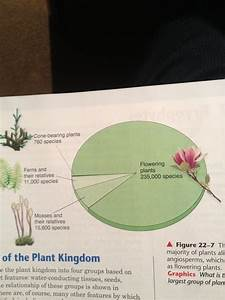 Daniel T Bio 20 Blog  Plantae