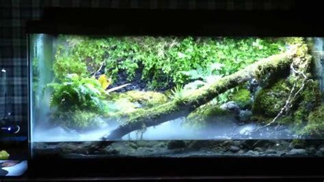 vivarium frog tank view    risk youtube