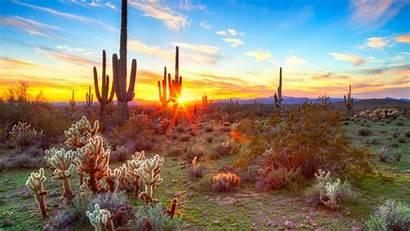 Park National Saguaro Arizona States United Weather