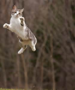 flying with a cat cats get airborne we get photos 10 flying cats