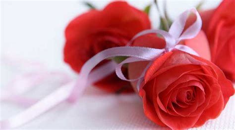 Why it is red rose for Valentine's week | Lifestyle News ...