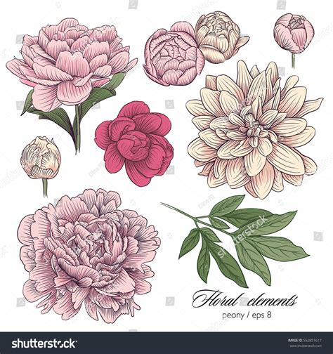 floral elements color vector vektornaya grafika