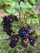 Long island, Forks and Wine tasting on Pinterest