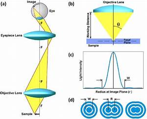 Principles Of Imaging With An Optical Microscope   A  Ray