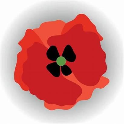 Remembrance Clip Poppy Illustrations Vector