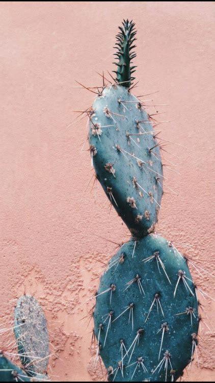 cactus wallpaper tumblr