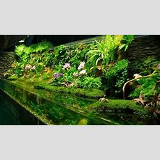 Aquascaping Styles, Design Ideas And Mistakes To Avoid