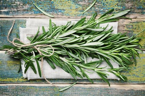rosemary substitute top 5 rosemary substitutes that you can use apr 2018