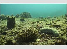 Digitizing the Coral Reefs of Easter Island and Salas y
