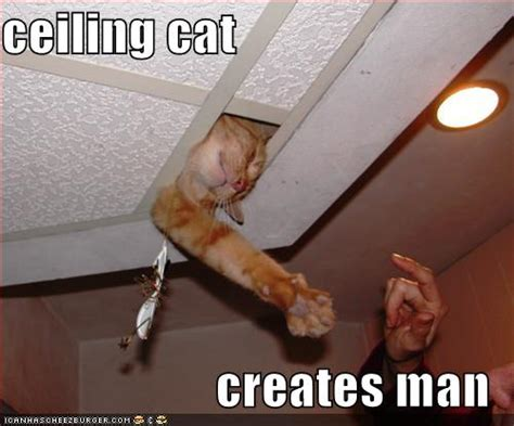 Ceiling Cat Meme - friday funny the saga of ceiling cat amy letinsky