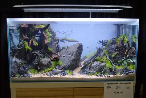 Award Winning Aquascapes by Aquascaping Live 2016 Large Tank Entries Results