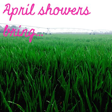 April Showers by April Showers Bring The Stuff