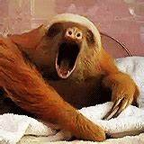 Sloth Yawn GIF - Find & Share on GIPHY