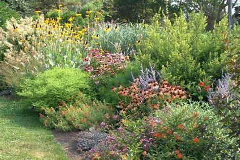 plants of the northwest northwest landscape plants low maintenance shrubs low maintenance planting design more than just