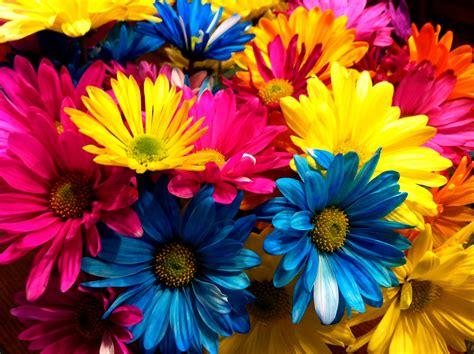 flower colors flower colour are due to free flower coloring pages best