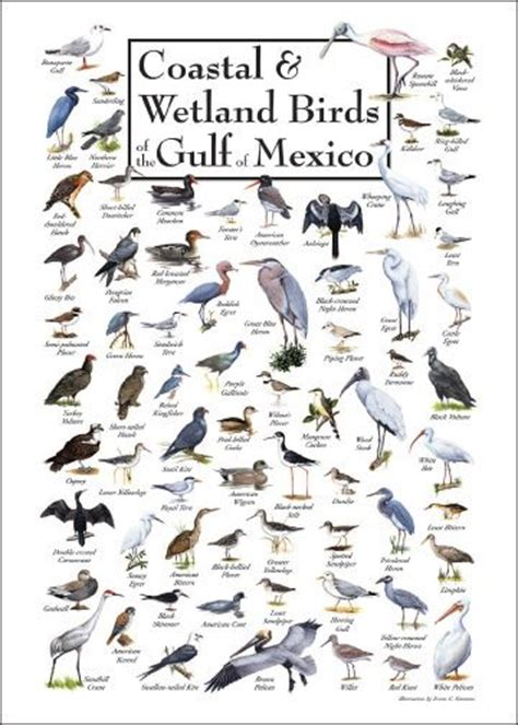 gulf of mexico bird identification and birds on pinterest