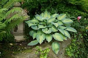 Garten Gestaltung Und Pflanzentipps Bambus Und Pflanzenshop