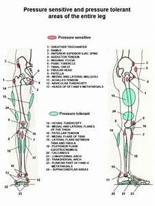 Biomechanics In Prosthetic Rehabilitation