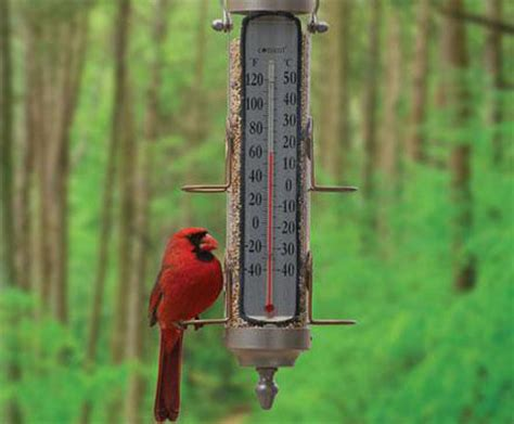 cardinal bird feeder about birds cardinal pics tips