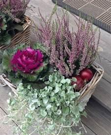 herbst balkon pflanzen 6 leuchtende herbst pflanzen für garten und blumenkästen