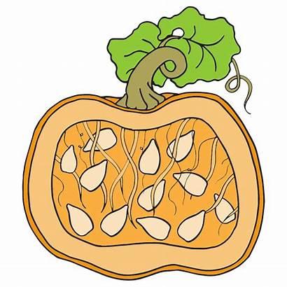 Pumpkin Clipart Parts Seed Line Pumpkins Label