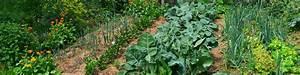 Blumenkohl Pflanzen Abstand : biog rtnern einfach biog rtnern zur selbstversorung mit eigenem gem se ~ Whattoseeinmadrid.com Haus und Dekorationen